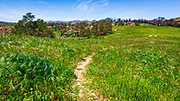 Hiker on the West Meadow Trail at Charmlee Wilderness Park, Malibu, California USA