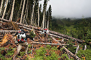 Climbers intending to summit Glacier Peak traverse an avalanche gully filed with knocked down trees in Glacier Peak Wilderness, Washington.