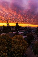 """Brand New Day"", Magnolia Neighborhood, Seattle"