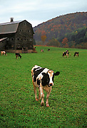 Image of a farm near Chelsea, Vermont, American Northeast by Randy Wells