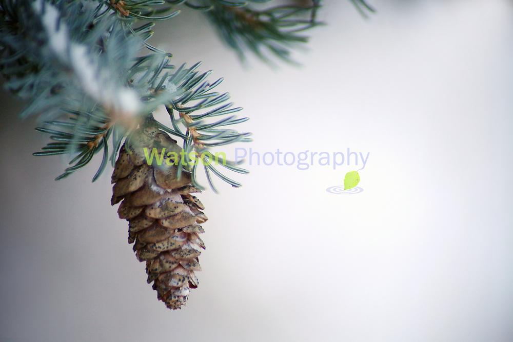 Ornaments of Winter