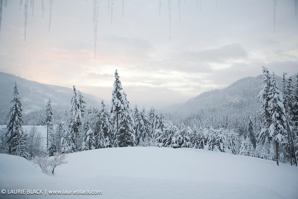 Northwest winter landscape