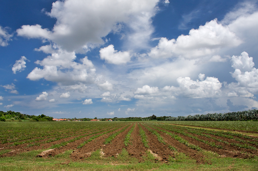 Fields Off Krome Ave. Miami-Dade County, FL