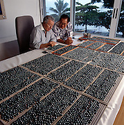Salvadore Assael, gem buyer for Harry Winston photographed with  Hong Kong businessman Robert Wan who is the largest single producer and exporter of Tahitian Black Pearls.  gest single producer and exporter of Tahitian Black Pearls.   Shot at Wan's Papeete Office.