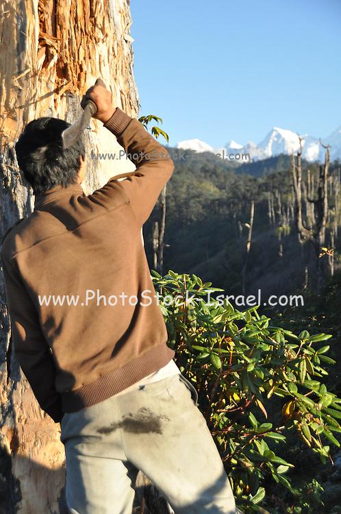 India, Sikkim, Himalayan Trek