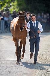 Paget Jonathan, (NZL), Clifton Lush<br /> CCI4* - Mitsubishi Motors Badminton Horse Trials 2016<br /> © Hippo Foto - Jon Stroud<br /> 06/05/16