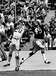 Oakland Raiders Mike Siani grabs pass against the Vikings #20 Bobby Bryant..(1973 photo/Ron Riesterer)