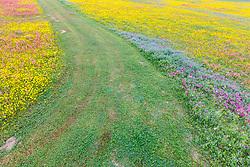 Path through wildflower field, near New Berlin Texas, near San Antonio, USA.