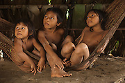 Huaorani Indian children in hammock. Gabaro Community. Yasuni National Park.<br /> Amazon rainforest, ECUADOR.  South America<br /> This Indian tribe were basically uncontacted until 1956 when missionaries from the Summer Institute of Linguistics made contact with them. However there are still some groups from the tribe that remain uncontacted.  They are known as the Tagaeri & Taromenani. Traditionally these Indians were very hostile and killed many people who tried to enter into their territory. Their territory is in the Yasuni National Park which is now also being exploited for oil.