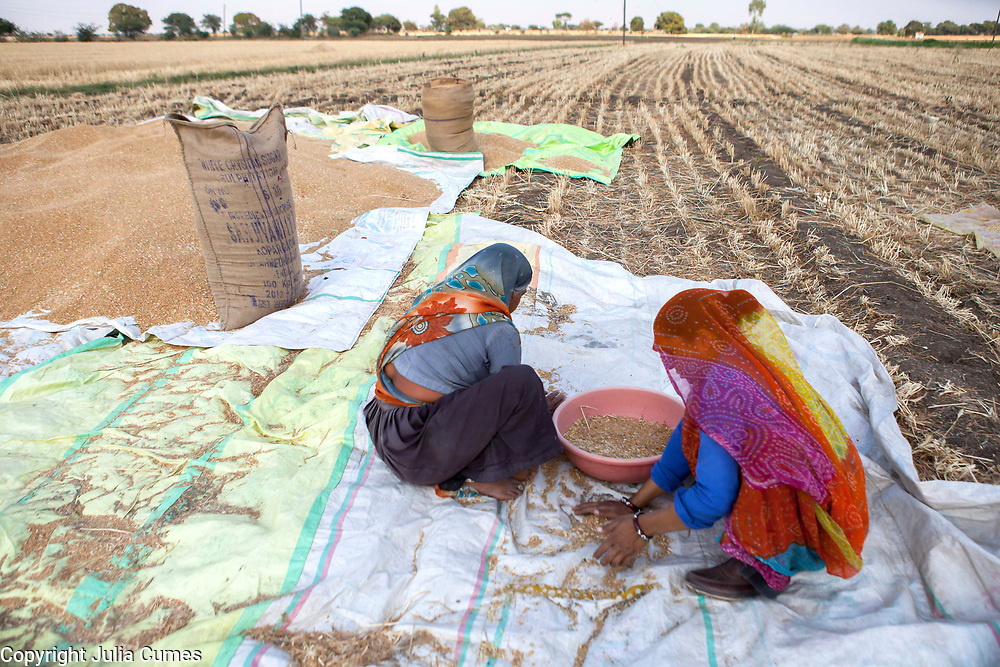 A woman and her daughter-in-law sort wheat in Bagdi, India.