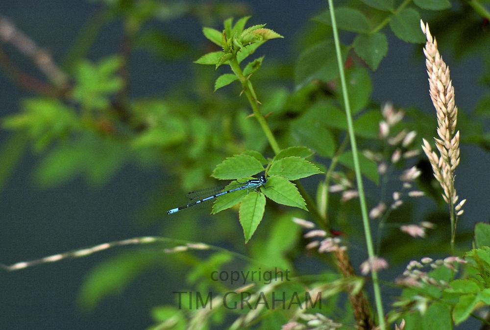 Dragonfly, England, United Kingdom.