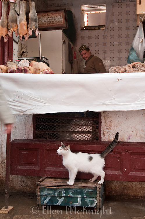 Cat looking for a handout at a butcher shop at the souk in Fes, Morocco