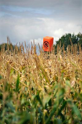 Nederland, Venraij, 11-9-2009In een maisveld hangt een oranje jerrycan op een stok om aam criminele henneptelers duidelijk te maken dat dit perceel regelmatig gecontroleerd wordt. Dit om te voorkomen dat in het veld wietplanten uitgezet worden.Foto: Flip Franssen/Hollandse Hoogte