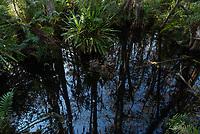Loxahatchee National Wildlife Refuge, Florida, USA.