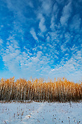 clouds and Bois des Esprits of the Seine River Forest at sunset.<br />Winnipeg<br />Manitoba<br />Canada