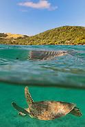 Culebra - In The Water