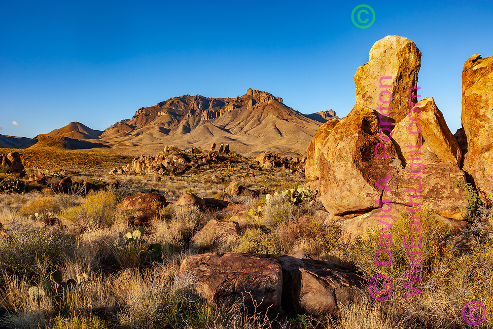 Chisos Mountains viewed from scenic rocky landscape in the Chihuahuan Desert, Big Bend National Park, TX, © David A. Ponton
