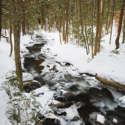 A hemlock forest in winter in Chesterfield Gorge. Chesterfield, New Hampshire.