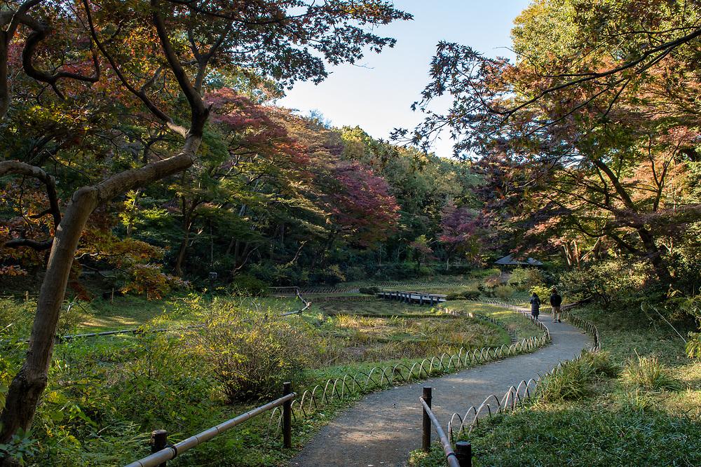 Meiji Shrine gardens full of autumn colours.