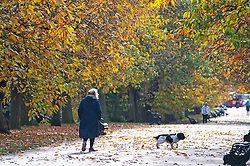 ©Licensed to London News Pictures 20/11/2019.<br /> Greenwich,UK. Autumnal colour at Greenwich Park, London this afternoon as cold autumn winds from the Artic has pushed temperatures down. Photo credit: Grant Falvey/LNP