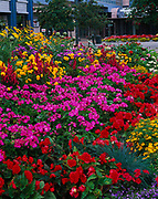 Summer garden in Town Square Park with the Performing Arts Center and Egan Center beyond, downtown Anchorage, Alaska.
