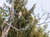 https://Duncan.co/owl-in-a-tree