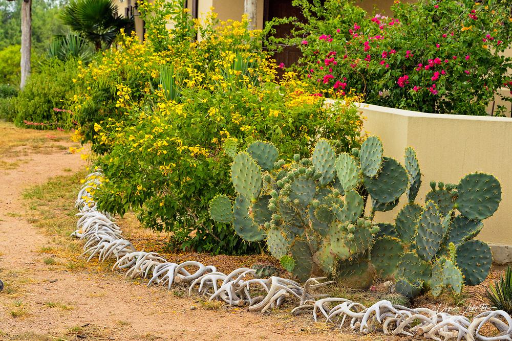 Desert landscaping around Campos Viejos Ranch, Rio Grande City, Texas, USA