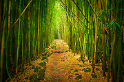 """Bamboo forest along the Pipiwai trail to Waimoku Fall in the Kipahulu area of Haleakala National Park in Maui, Hawaii<br /> .....<br /> Haleakalā National Park was established as a separate unit of the National Park System in 1960 (it was previously joined with Hawaiʻi National Park on Hawaiʻi Island). At the time, the park only consisted of the crater area of Haleakalā. On March 26, 1951, Kīpahulu Valley was added to Haleakalā National Park (HNP) as the Kīpahulu Biological Reserve to insure protection of endangered ecosystems within the sanctuary. Eighteen years later on January 10, 1969, the HNP boundaries were expanded to include the Kīpahulu coastal area of ʻOheʻo. Although access in the Kīpahulu Biological Reserve is strictly limited to researchers and managers, the ʻOheʻo region of the park is open for recreation. Attractions include the ʻOheʻo Pools, often called the """"Seven Sacred Pools"""" (a name created by tourism proponents), a car-accessible campground, and several maintained trails, such as the four-mile Pipiwai Loop Trail to Waimoku waterfall. The Kīpahulu ʻOhana, a non-profit community organization established in 1995 through a co-operative agreement with Haleakalā National Park to revive, restore, and share the practices of traditional Native Hawaiian culture, also conducts community-based cultural tours in the area."""
