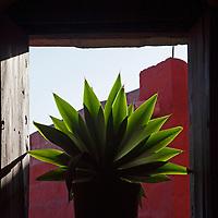 South America, Peru, Arequipa. Plant in window of Monasterio de Santa Catalina.
