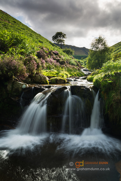 Fleeting light catches the flowering heather and lush vegetation around this stunning waterfall at Fairbrook. Kinder Scout is visible in the distance. Peak District National Park. Derbyshire, England, UK. Summer.