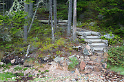 Stone and log steps leading from the beach into the woods along the Ship Harbor Nature Trail, Acadia National Park, Maine