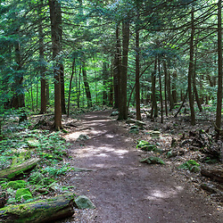 Benton, PA, USA - June 15, 2013: Walking trail in Pennsylvania's Ricketts Glen State Park.