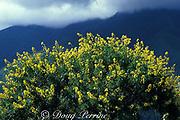 wildflowers and mountains near <br /> Valencia, Venezuela, <br /> South America ( Caribbean Sea )