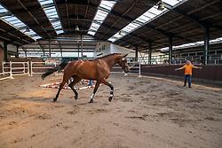 16, Kamilla H<br /> Stamboek keuring KWPN Turnhout 2020<br /> 16, Kamilla H<br /> 18/07/2020