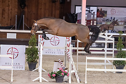 020, Suives Moi STB<br /> BWP Hengstenkeuring 2021<br /> © Hippo Foto - Dirk Caremans<br />  13/01/2021