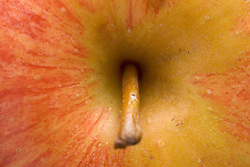 Apple stalk,