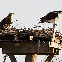 Stock - Birds (all)