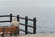man with pet dog sitting on a bench overlooking the water Tokyo Bay Yokosuka