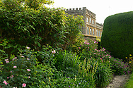 A herbaceous border of pink Rosa and Sisyrinchium striatum at Forde Abbey, Chard, Dorset, UK