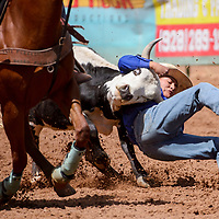 Steer wrestler Matthew Jodie pulls his steer to the ground in the second round of the New Mexico High School Finals rodeo at Red Rock Park in Gallup Saturday.