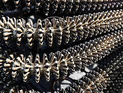 Detail of Radiator Grille, Full Frame