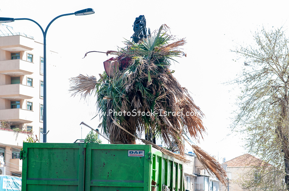 Municipal Grapple truck removes plant debris from a sidewalk. Photographed in Tel Aviv, Israel