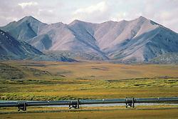 Alyeska Pipe Line & Brooks Range