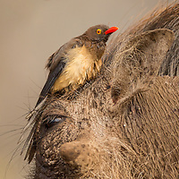 A selection of birds from African countries, including Kenya, Botswana, Namibia and South Africa.