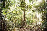 Forest in Batang Al National Park, Kuching, Sarawak, Malaysian Borneo