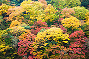 Autumn in Kyoto, Japan. The garden trees are red, orange and yellow