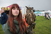 EMILY OF SUSSEX FALCONRY WITH TINY A EUROPEAN EAGLE OWL, Heathfield Agricultural show. little tottingworth farm, broad oak, 28 May 2016