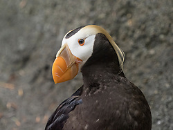 United States, Washington, Tacoma, Point Defiance Zoo