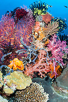 Coral Reef Smorgasbord---Soft and Hard Corals, Gorgonians, Crinoids, Tunicates, and Reef Fish<br /> <br /> Shot in Indonesia
