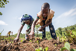 4 June 2019, Meiganga, Cameroon: 26-year-old CAR refugee Bahene Felix (right) acts as community mobilizer in the Ngam refugee camp, here working a field alongside Sali Farimatou Bouda (left). In collaboration with the LWF, Felix oversees and guides the work of a group of CAR refugees trained by the Lutheran World Federation in modern farming techniques. By keeping a strict ratio of how many seeds to sow per hectare, and by sowing Cassava and Groundnut together, they are able to both increase harvests and retain soil fertility over a longer time. Supported by the Lutheran World Federation, the Ngam refugee camp, located in the Meiganga municipality, Adamaoua region of Cameroon, hosts 7,228 refugees from the Central African Republic, across 2,088 households.